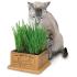#3844 Kitty's Garden